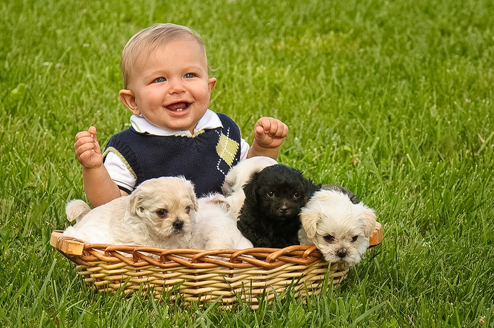 baby_puppies_navarre_ohio_lawn