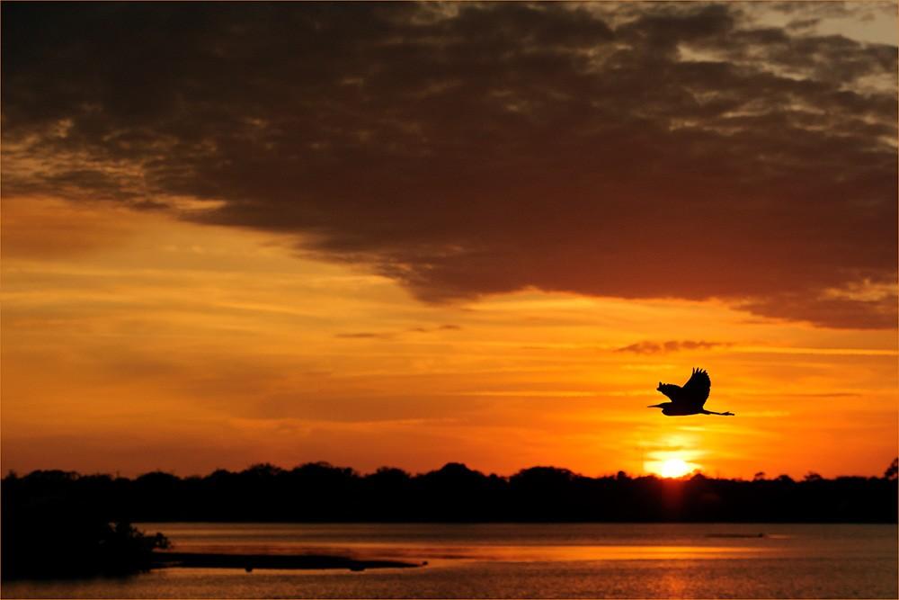 blue-heron-halifax-river-sunset