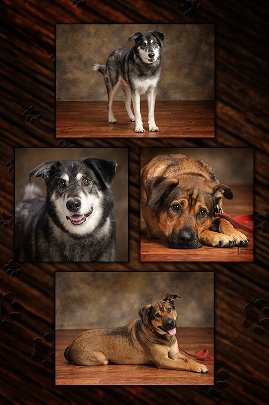 dog_composite_george_booney_pooch