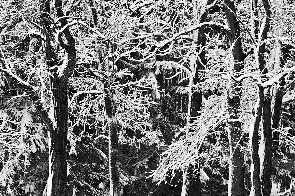 north_canton_snow_covered_trees